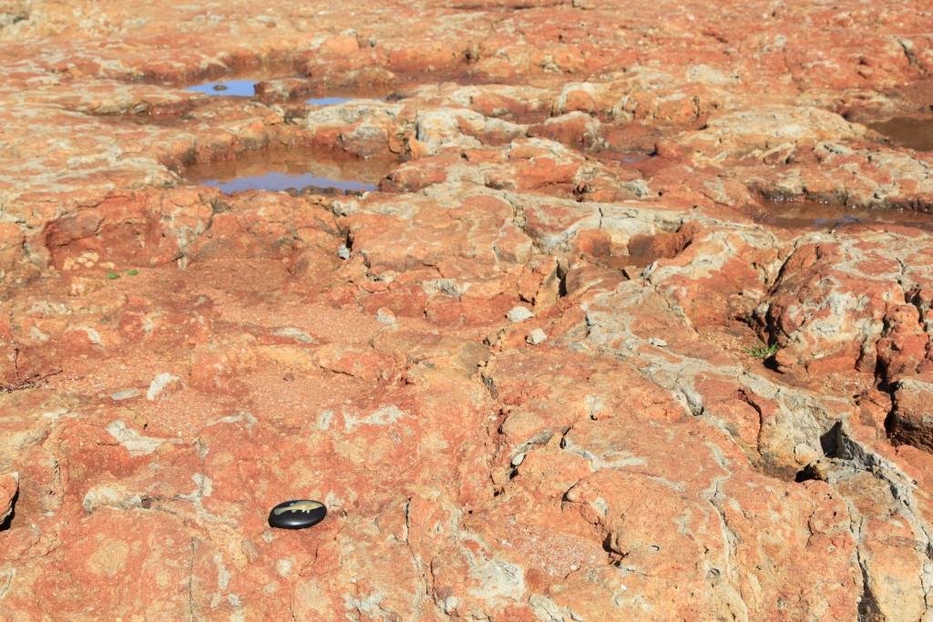 2. bonegilla, victoria colour photograph, 40h x 60w cm, 2015