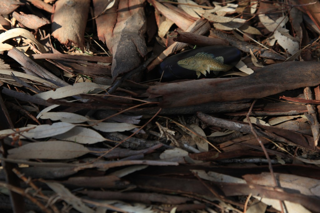 5. swan hill, victoria colour, photograph 40h x 60w cm, 2015