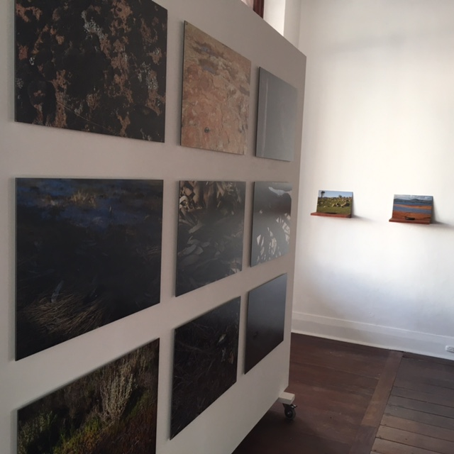 Installation View, Fish out of Water – Murray Cod, Colour photographs, each 40h x 60w cm, edition of 6, 2015 and Fish out of Water – Murray Cod, 9 redgum shelves individually etched, 9 colour photographs, and 9 petrified redgum forms and gouache. Each component measures, approximately 23h x 30w x 25d cm, overall dimensions variable, 2015