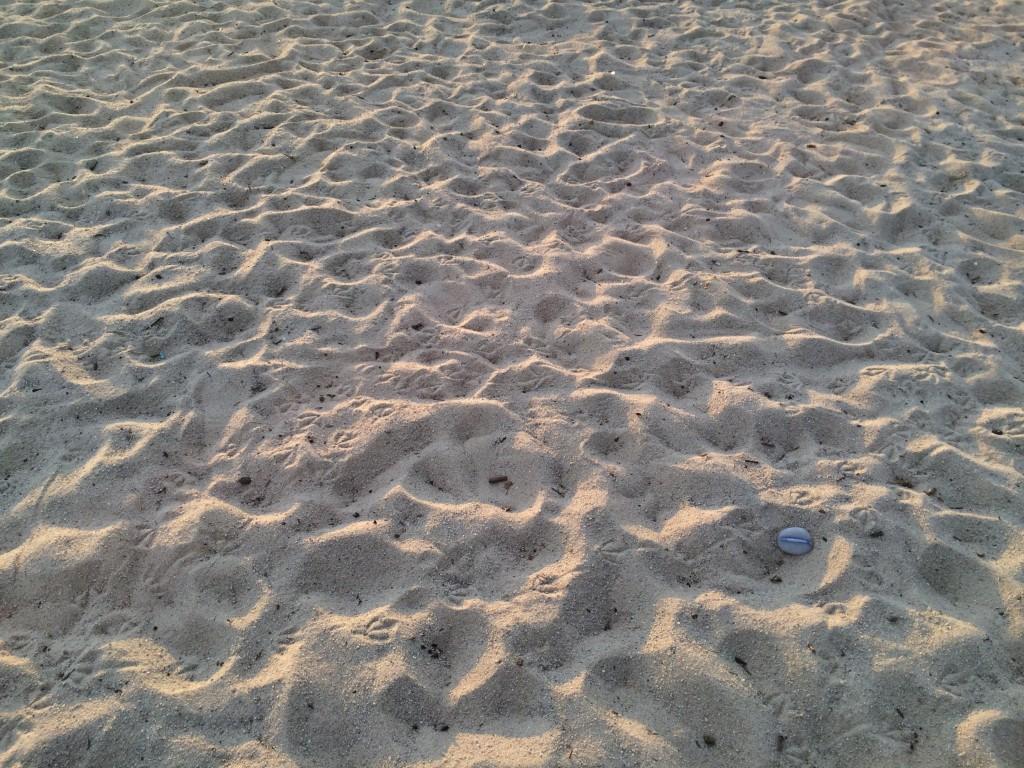 9. Summer Solstice, Elwood Beach, 21 December 2014