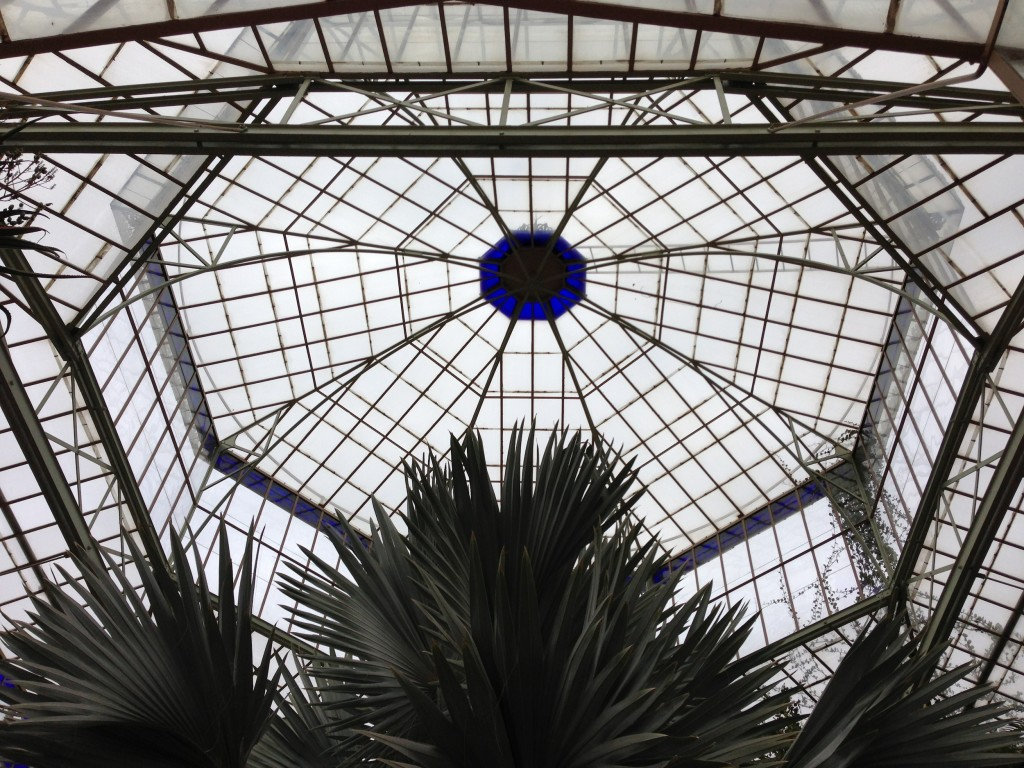 A little explore in the conservatory and the beautiful glass roof.